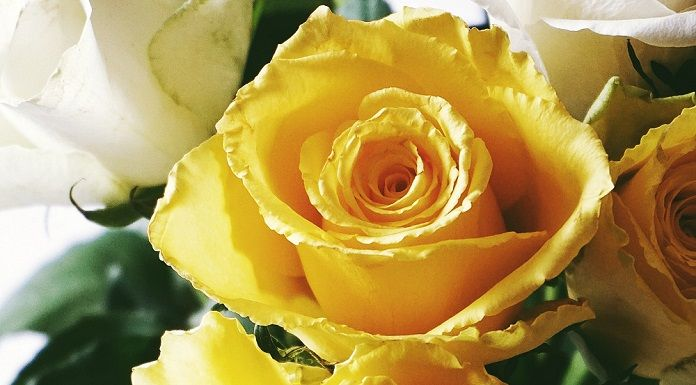 8 Stunning Yellow Flowers And Their Meanings